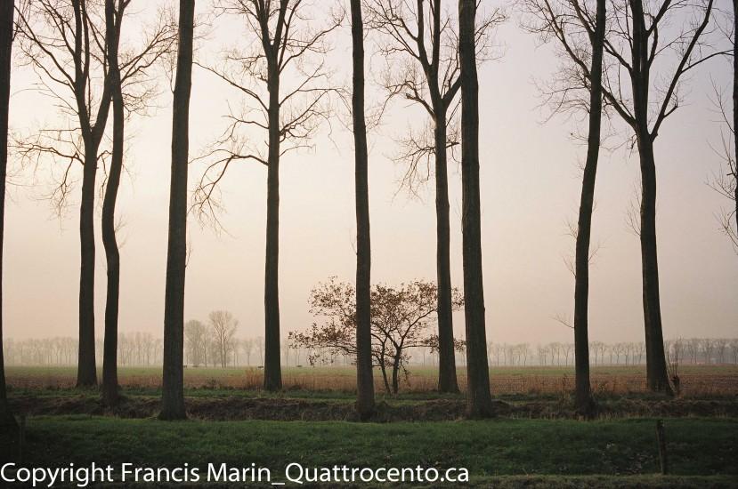 arbres Belgique-08980001