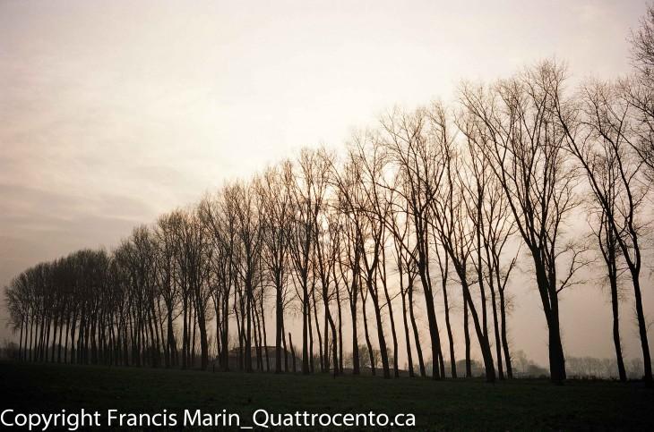 arbres Belgique-08980002