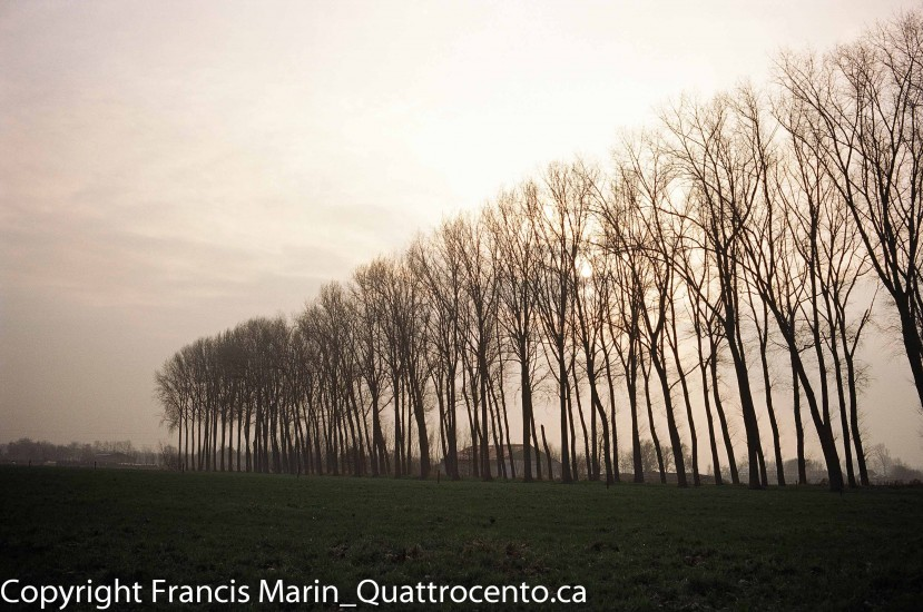 arbres Belgique-08980003