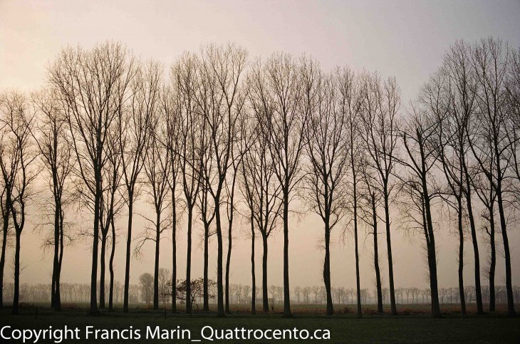 arbres Belgique-08980004